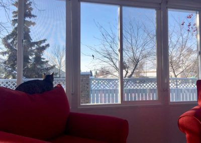 Cat sitting in an all season sunroom in the winter